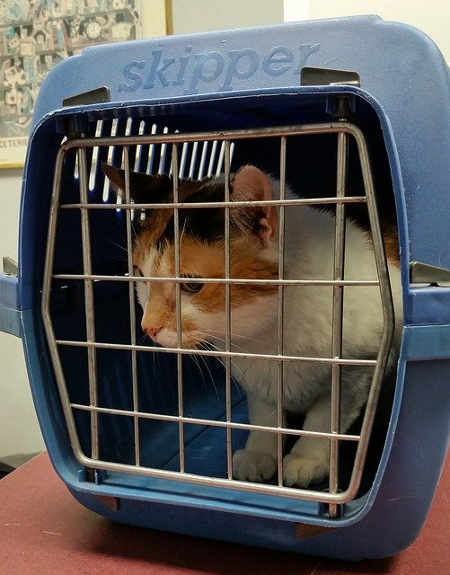 cat ready to transport